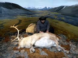 svalbard reindeer wikipedia