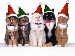 cat christmas we wish you a merry christmas meow gifs