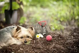 coping with loss of pet saying goodbye grieving and coping with pet loss veterinary