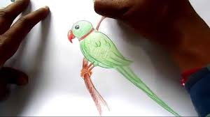 draw parrot step step