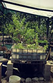 372 best permaculture etcetera images on pinterest organic