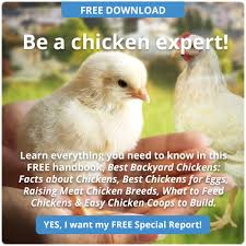 Backyard Poultry For Sale by Feeding Backyard Chickens 5 Common Mistakes To Avoid Backyard
