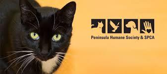 humane society black friday peninsula humane society u0026 spca home facebook