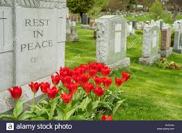 headstones nj headstones in a cemetary with tulips and rest in peace stock
