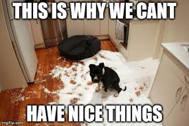 This Is Dog Meme - 11 dog memes this is why we can t have nice things puppy leaks
