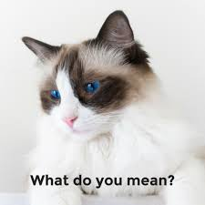 Mean Cat Memes - did you know that cats get utis uqora