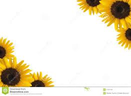 single sun flower wallpapers sunflower corner border clipart amazing wallpapers