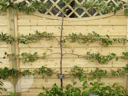 best 25 fruit trees for sale ideas on buy fruit trees