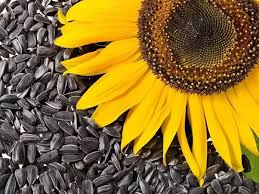 what are the health benefits of sunflower seeds quora