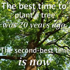 how to plant a tree in 3 easy steps the no nonsense guide