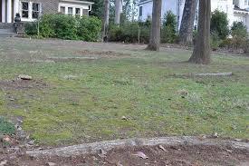 Backyard Soil Planting Logs To Grow Soil Leah Pine Landscape Architect