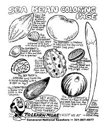 Canaveral National Seashore Titusville Florida Sea Beans Photosynthesis Coloring Page