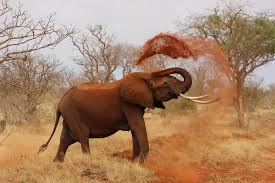 Stop hunting wild animals save elephants from mass killing stop