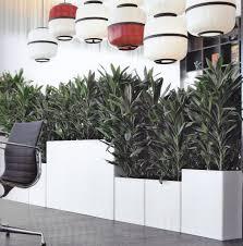 Best Low Light Plants Low Light Level Plants Plantforce Office Plants London