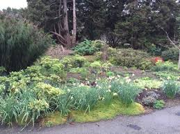 Fort Bragg Botanical Garden Mendocino Botanical Gardens Picture Of Mendocino Coast Botanical