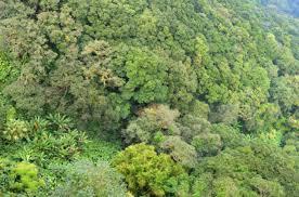 canopy amazon 10 wild facts about the amazon rainforest listverse