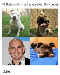pit bulls smiling is the greatest thing ever dale meme on me me