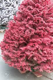 flocked christmas trees on sale christmas lights decoration