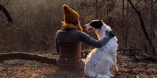 traveling with pets smartertravel