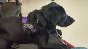 when is a dog a service dog or an excuse no non cents nanna