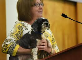 affenpinscher in orlando fl palm beach county calls for end to importing dogs cats sun sentinel