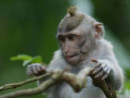 picture monkey 7 lovely funny and wild animal infowpb com