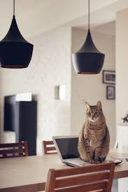 cat house 6 interior design ideas
