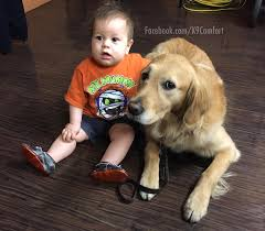 How To Get A Comfort Dog Lcc K 9 Comfort Dogs Home Facebook