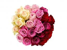 how much does a dozen roses cost 14 best s day roses the independent