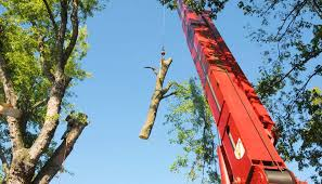 louisville tree service tree trimming stump removal craning