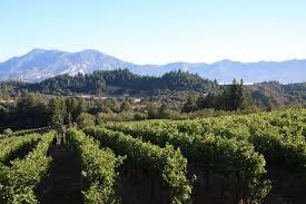 vines heller family vineyards