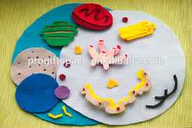 2017 sell eco friendly animal cell model felt set made in