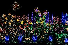 Botanical Gardens Lights Lights Bellevue Botanical Gardens Seattle