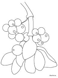 mistletoe flowers coloring pages u0026 coloring book