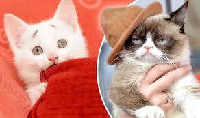Kitty Meme Generator - meet concerned kitten the grumpy cat rival taking the web by