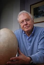 127 best bird eggs images on pinterest bird nests eggs and spring