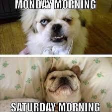 Saturday Meme - saturday funny meme 7 king tumblr