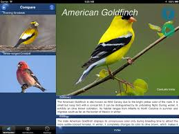 bird id usa guide to identify backyard birds app ranking and store