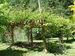 Trellis 8 8 Best Fruit Garden Images On Pinterest Fruit Garden Garden