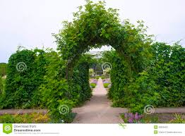 green natural arch of climbing plants stock photo image 40959453
