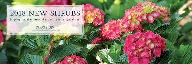 wayside gardens america u0027s premiere source of choice plants and