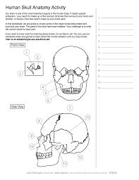 ask a biologist human skeleton