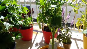 Patio Vegetables by My Patio Garden Fruits And Vegetables Youtube