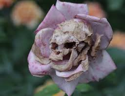 skull flower the gift for photo
