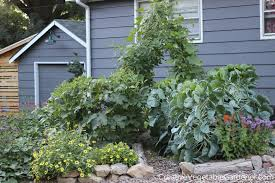 creative vegetable gardener why mulch is the ultimate garden tool