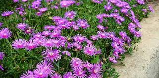 perennial flower garden basics today u0027s homeowner