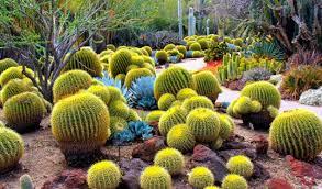 Cactus Garden Ideas 12 Cactus Garden Ideas For You Top Inspirations