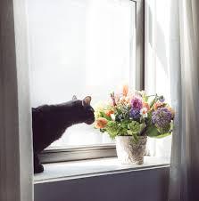 How To Make Roses Live Longer In A Vase How To Make Fresh Cut Flowers Last Longer