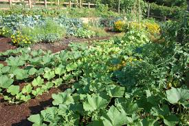 Small Home Vegetable Garden Ideas by Backyard Vegetable Garden House Design With Various Summer Plants