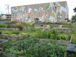 Urban Gardens San Francisco - candlestick pt community garden san francisco parks alliance